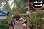 بالفيديو .. فيل غاضب يَقلب السيارات ويُثير الفزع