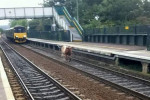 بقرة تشلّ حركة القطارات بين مدينتين في ألمانيا