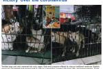 """تقرير صادم لصحيفة """"دايلي مايل""""...أسواق الصين لازالت تبيع الخفافيش والكلاب والقطط"""