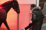 مولر يرقص مع حصان زوجته للاحتفال بتألقه أمام بيشيكتاش